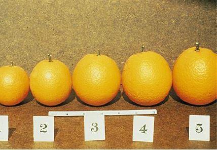 Estrategias de Fertilización Potásica  en Frutales