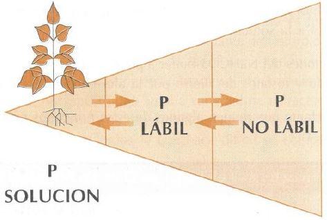 Reaccion de Fertilizantes Fosforicos en el Suelo
