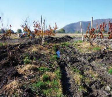 Preparacion del Suelo para Plantaciones de Frutales