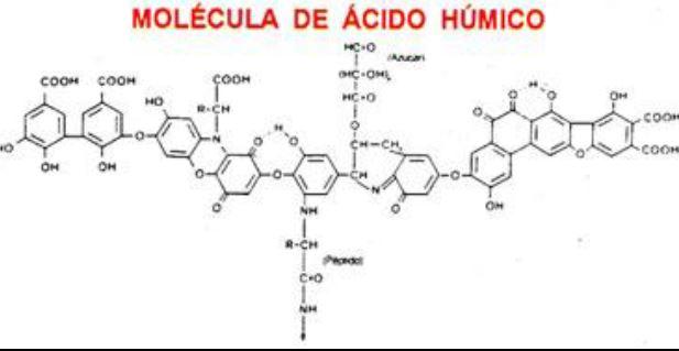 Funciones de las Sustancias Humicas Acidos Humicos