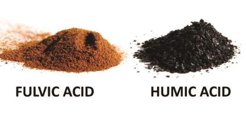 Funciones de las Sustancias Humicas Acidos Fulvicos