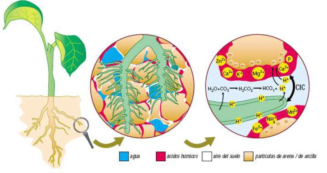 El Contenido de Acidos Humicos y Fulvicos en Fertilizantes Organicos