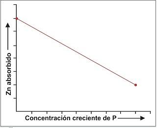 Relaciones Fosforo-Zinc en el Suelo y Planta