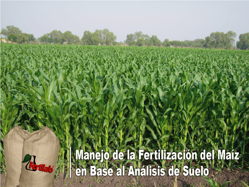 fertilizantes en maiz-Fertilab